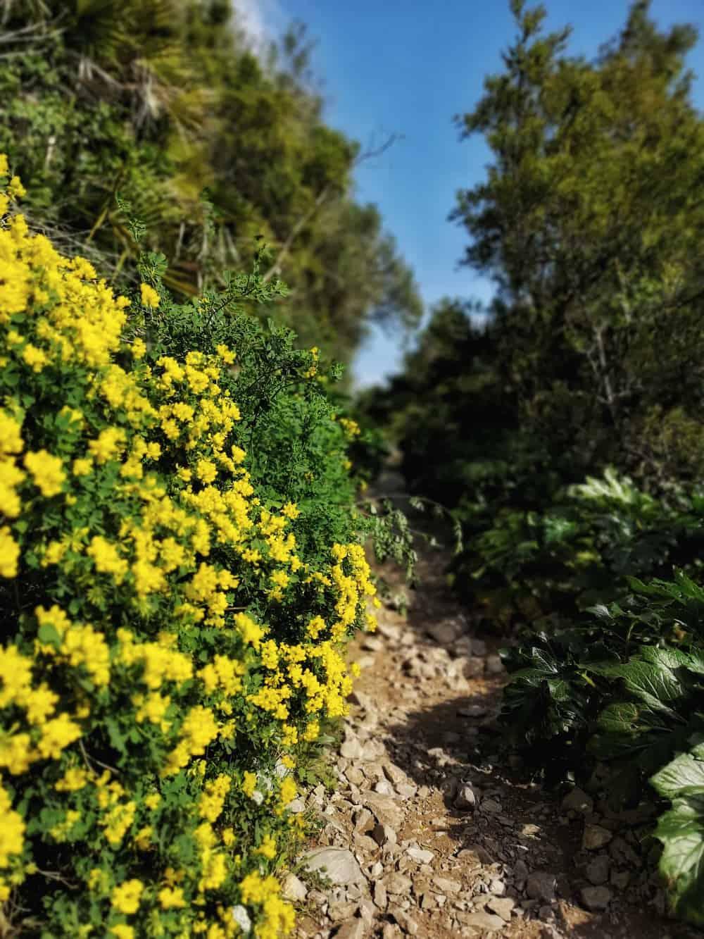 Gibraltar Felsen Naturpfad - www.upandaway.de